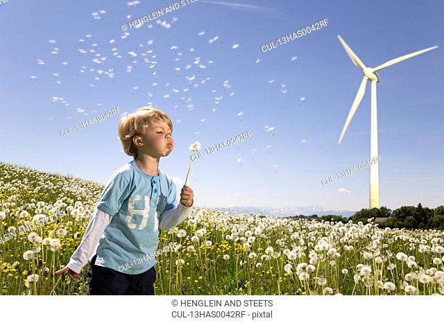 boy blowing dandelion at wind turbine