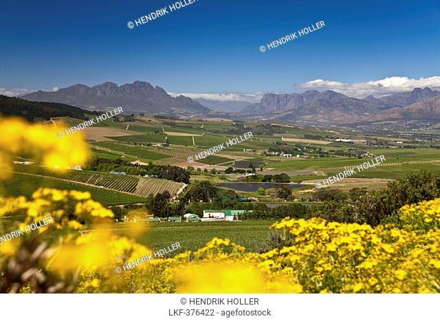 View onto the vineyards of Jordan Winery, Stellenbosch, Western Cape, South Africa
