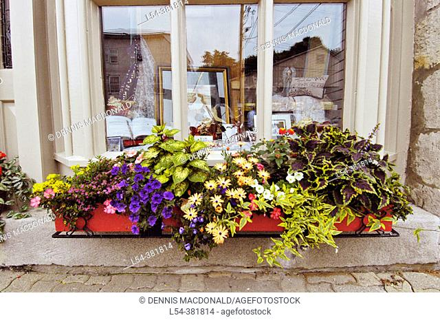 Window with flowers and green foliage. Stratford, Ontario, Canada