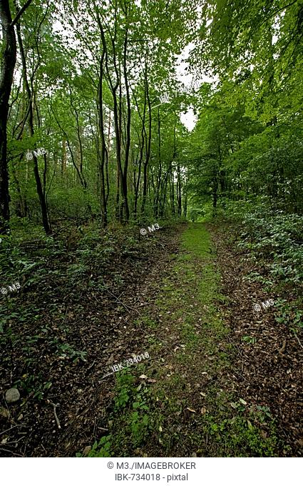 Path through a forest in summertime, Mecklenburg-Western Pomerania, Germany, Europe