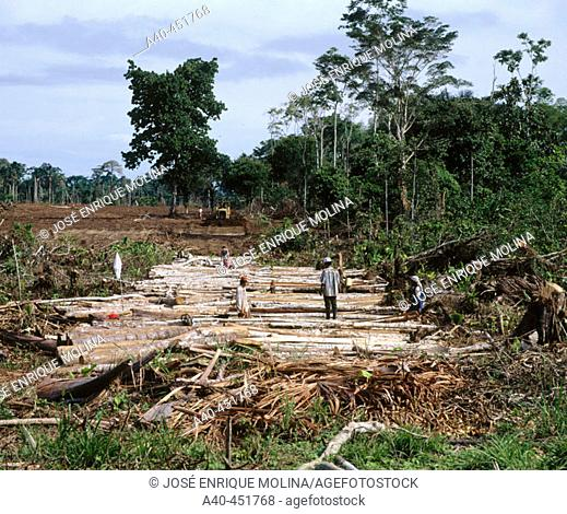 Building a road in the forest. Amazon. Deforestation. Ecuador