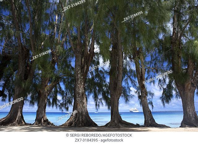 Fakarava, Tuamotus Archipelago French Polynesia, Tuamotu Islands, South Pacific. Trees next to the see. Paul Gauguin back