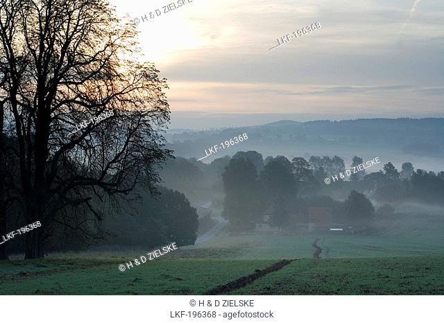 Idyllic landscape in the morning mist, Domain Beberbeck, Hesse, Germany, Europe