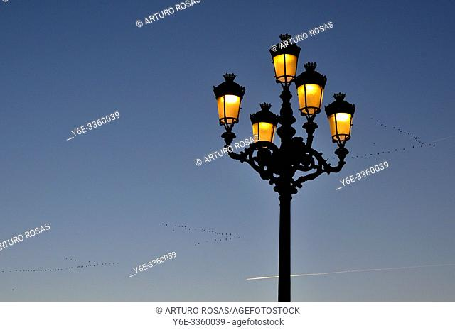 Street lamp and flock of birds. Armería Square, Madrid