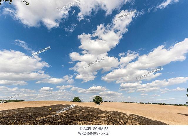 Farmland, district Malchin, Mecklenburg Vorpommern, Germany