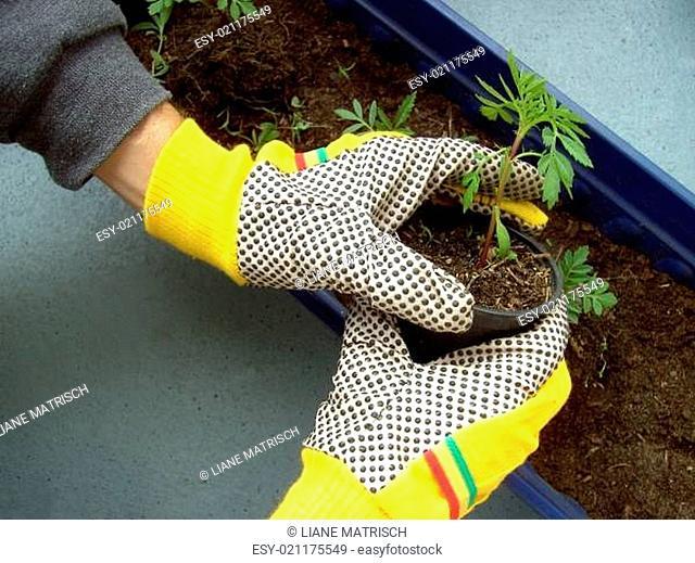 Balkonkasten bepflanzen 03
