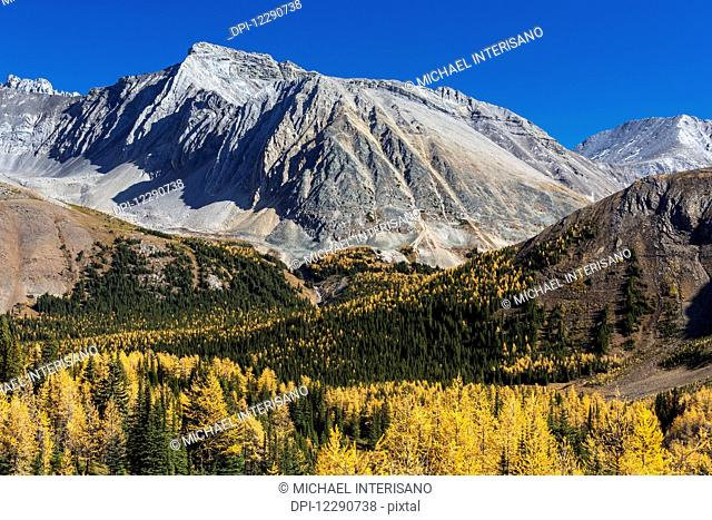 Alpine valley with colourful larch trees in autumn and rocky peaks with blue sky, Kananaskis Provincial Park; Alberta, Canada