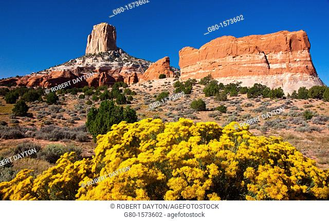During the summer wildflowers bloom in the red rock country of Arizona