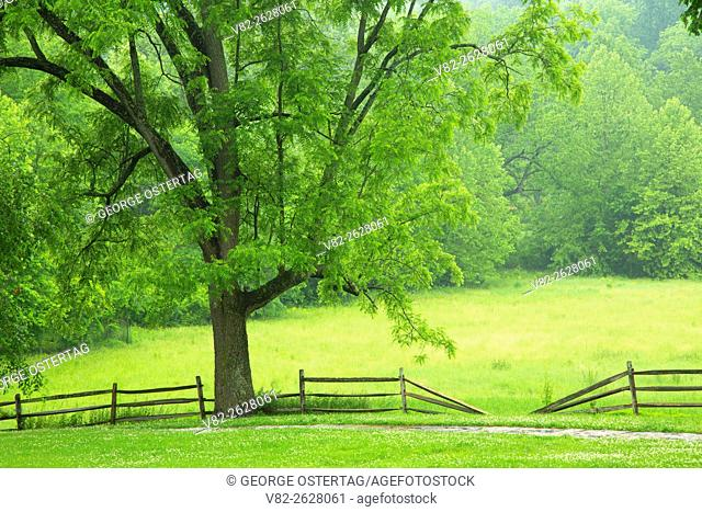 Meadow fence, Valley Forge National Historical Park, Pennsylvania