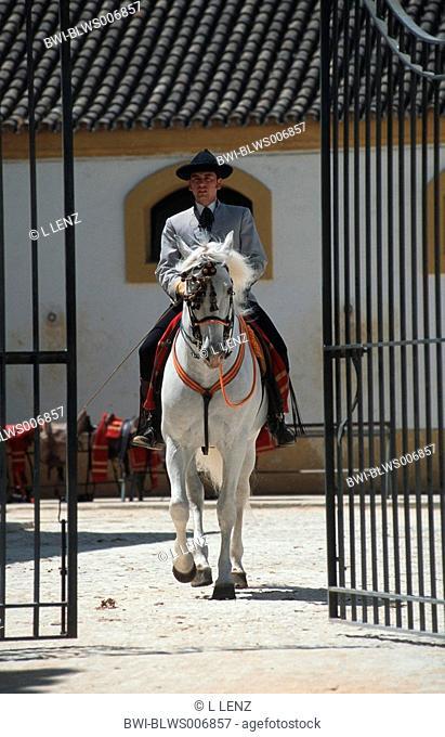 Andalusian horse Equus przewalskii f. caballus, Feria del Caballo