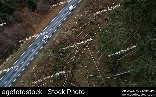 17 February 2020, Rhineland-Palatinate, Ransbach-Baumbach: Folded trees lie next to a country road in the Westerwald after the passage of the storm depressions...