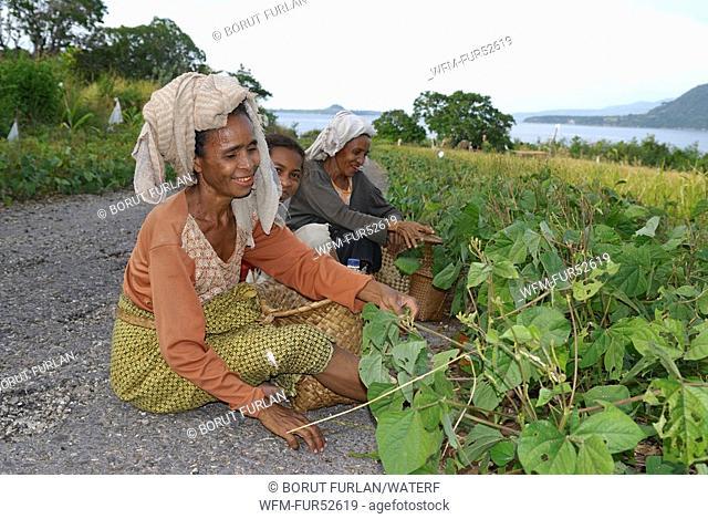 Farmers on Pantar Island, Alor Archipelago, Lesser Sunda Islands, Indonesia
