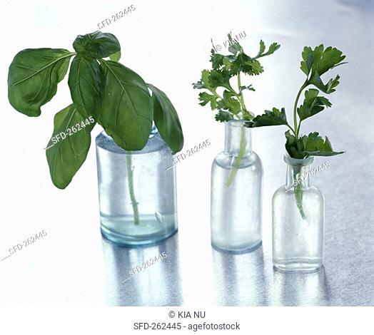 An assortment of herbs in bottles of water