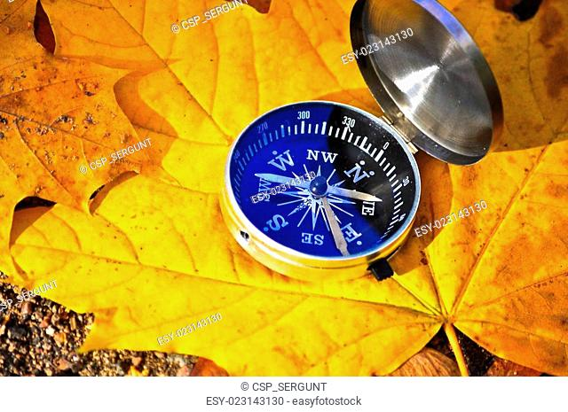 Compass among the autumn leaves