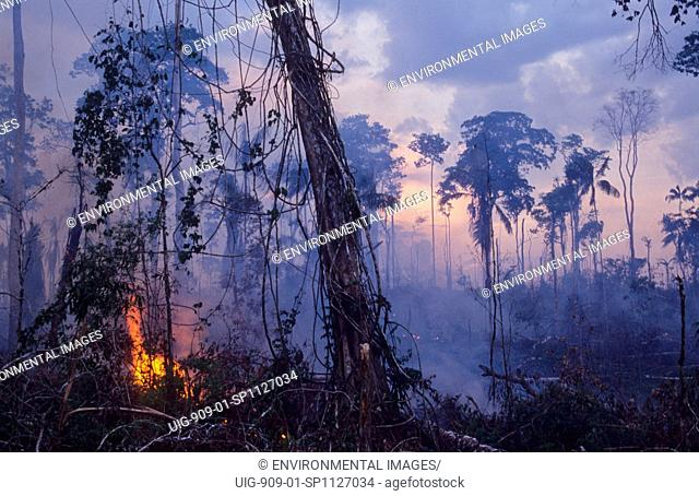 DESTRUCTION - AMAZON, BRAZIL.Vicinitiy Rio Branco. Burning the forest to enlarge cattle ranches. . In the last ten years alone 10 of the Amazon has been cleared