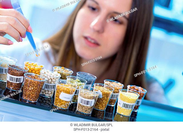 Female scientist studying legumes in the laboratory