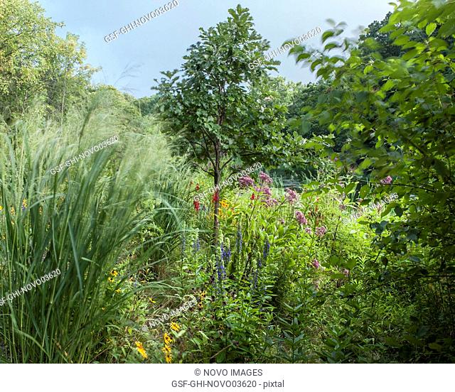 Various Native Plants and Tall Grasses near Pond
