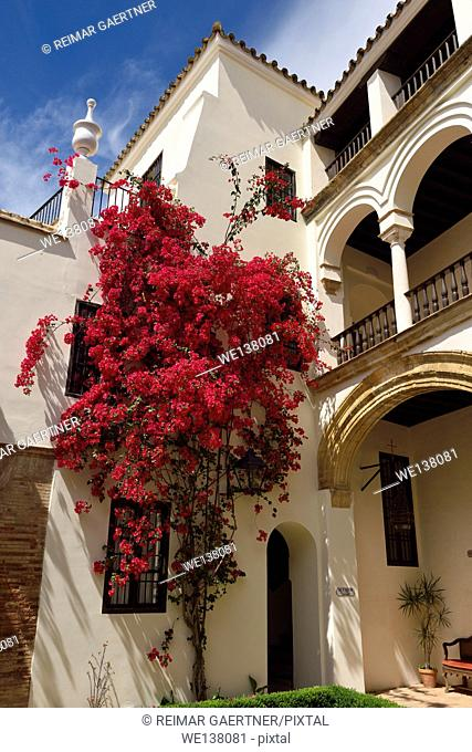 Interior courtyard with bougainvillea of las casas de la juderia hotel in Cordoba Spain