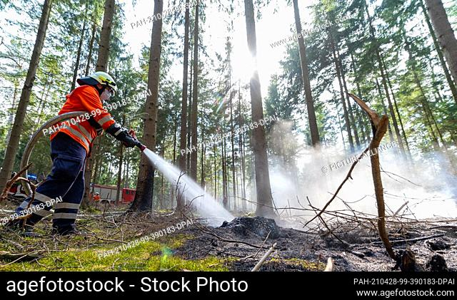 28 April 2021, Lower Saxony, Melbeck: A firefighter extinguishes a forest fire. By chance, emergency vehicles of the federal police had passed by after an...