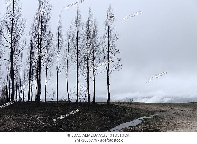 Summer has passed in the Central regions of Portugal and Winter has arrived, after the destructive wilfires that destroyed large areas of forest