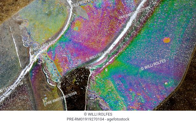 Ice on a puddle, Goldenstedter Moor in winter, Niedersachsen, Lower Saxony, Germany / Eis auf einer Pfütze, Goldenstedter Moor im Winter, Niedersachsen