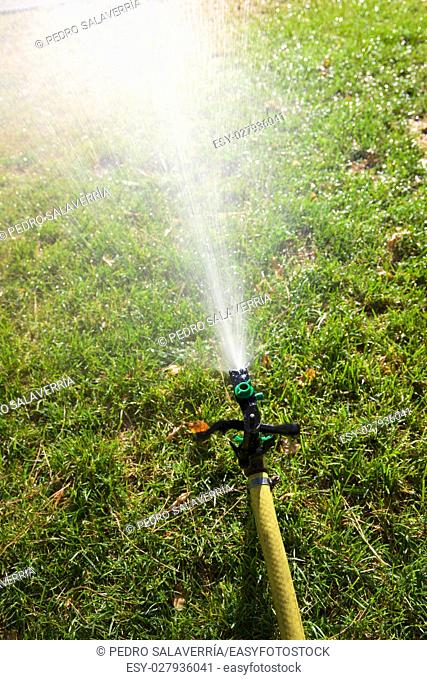 Closeup of a sprinkler watering a garden