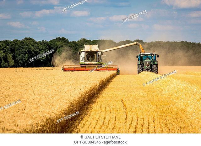 HARVESTING AT THE VILTAIN FARM FARM, JOUY EN JOSAS, (78) YVELINES, ILE-DE-FRANCE