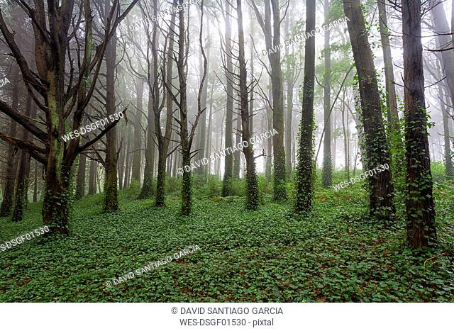 Portugal, Sintra, forest in spring
