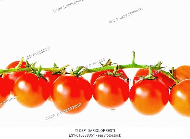 Tomato line