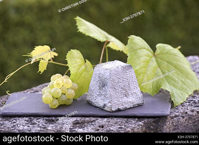 Valencay AOP, Goat cheese in the shape of a typical truncated pyramid, Domaine de Poulaines, Poulaines, Department of Indre, Historic Province of Berry