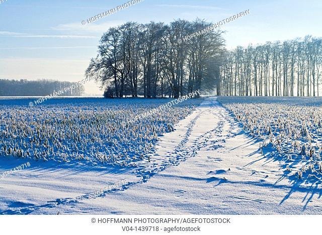 Winter landscape, Lower Saxony, Germany, Europe