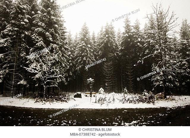 Forest path in the Arnsberg Forest Nature Park in winter, Hochsauerland, Sauerland, North Rhine-Westphalia, Germany