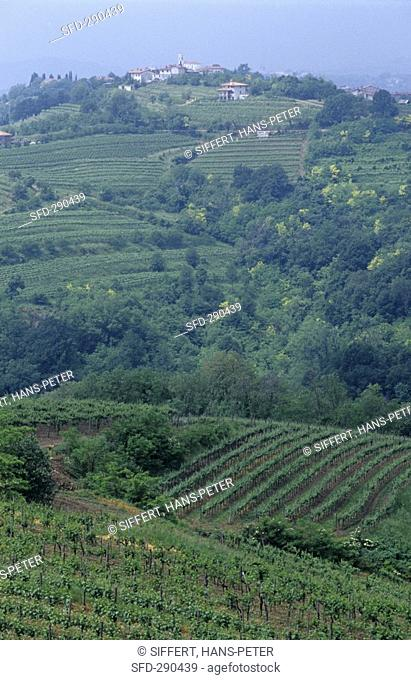 View towards Kojsko, Collio region, Friuli, N  Italy Not available in CH