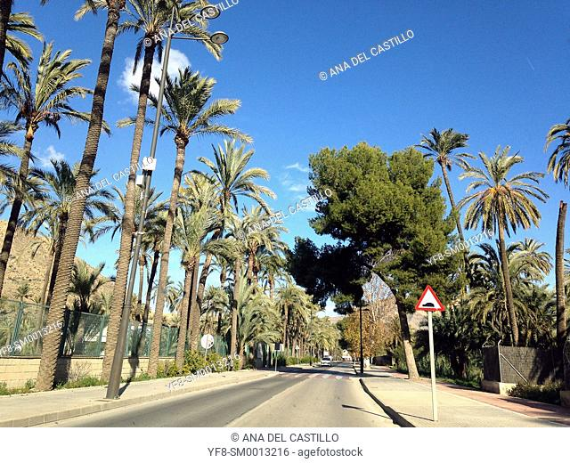 Palm trees in Lorca, Murcia Province, Spain