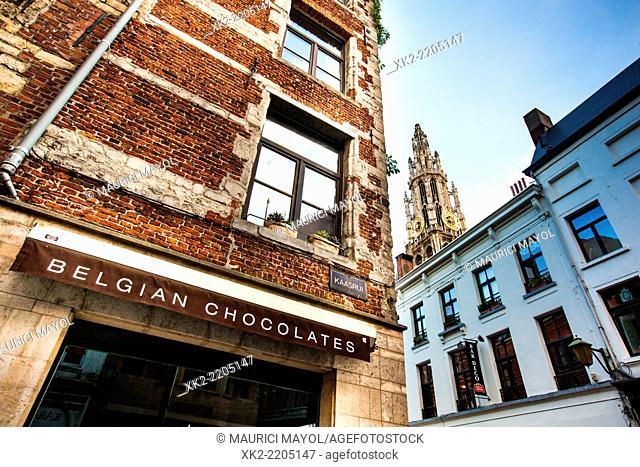 Belgian Chocolates winkel near Cathedral in Antwerp, Belgium