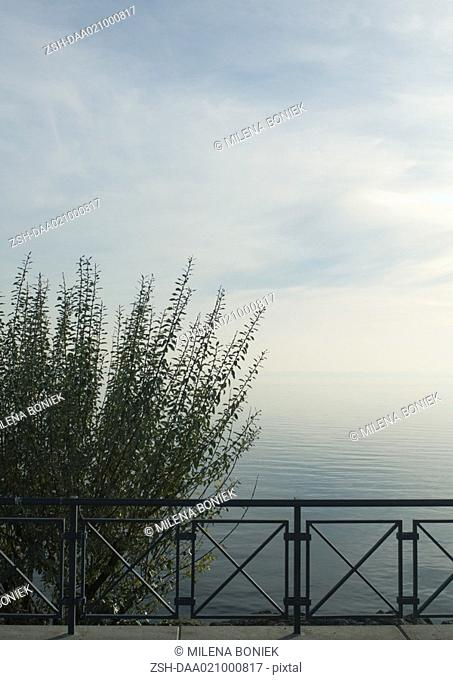 Guardrail and bush overlooking body of water