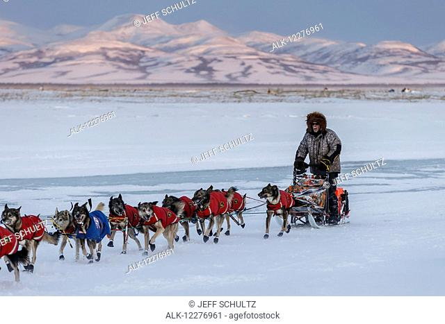 Jeff King on the frozen slough arriving at Unalakleet at sunset during Iditarod 2015