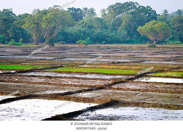Rice fields divided on many lots