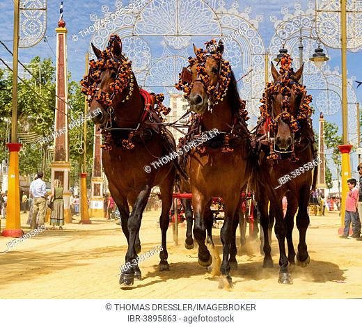 Decorated horses at the Feria del Caballo Horse Fair, Jerez de la Frontera, Cádiz province, Andalusia, Spain