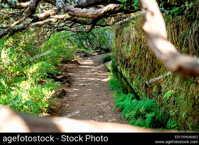Wooded path in a levada on the island of Madeira