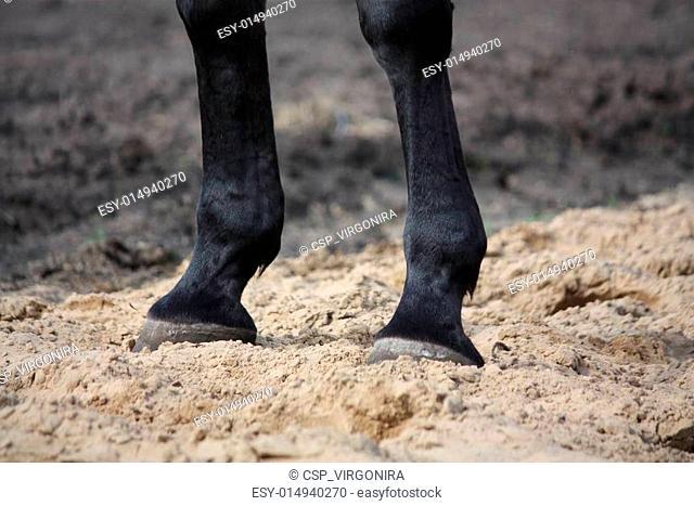 Close up of horse legs