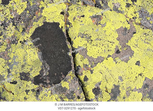 Lichen community dominated by map lichen (Rhizocarpon geographicum) on a granitic rock. This photo was taken in Sierra de Gredos, Avila province, Castilla-Leon