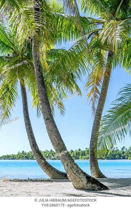 Sea view through palm trees on Moorea island, French Polynesia