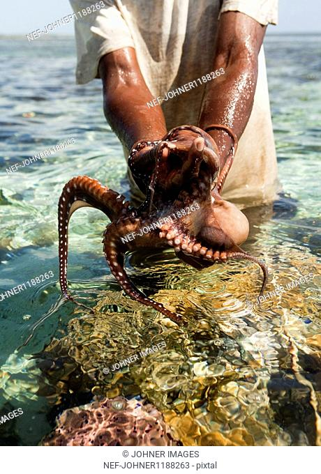 Man catching octopus in sea, mid section