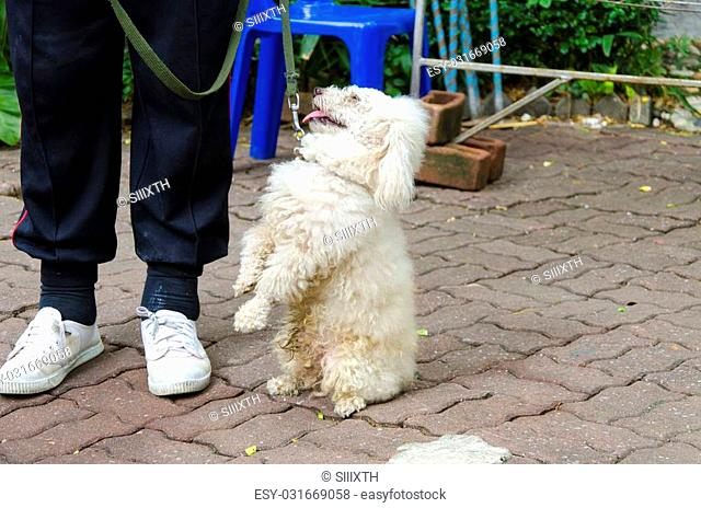 BANGKOK - AUGUST 2 2014, Dusit Sound Dog Show in Dusit Zoo or Kaow-din Zoo ,More Dog have a special talent show for free,for people who come to visit Dusit Zoo