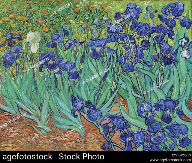 Irises by Vincent van Gogh. Vincent van Gogh, 1853 - 1890, Dutch Post-Impressionist artist. Irises was painted in 1889 while van Gogh was in the asylum at...