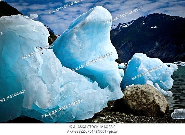 Icebergs from McBride Glacier stranded on shore at low tide, Muir Inlet, Glacier Bay National Park & Preserve, Southeast Alaska, Summer
