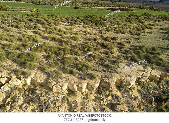 Esparto (Macrochloa tenacissima). Dron view. Almansa. Albacete. Spain