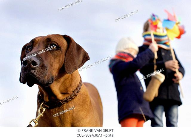Gazing dog with boy and girl and paper windmills at coast