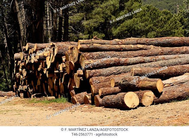 Pine logging. Casillas. Avila Province. Spain